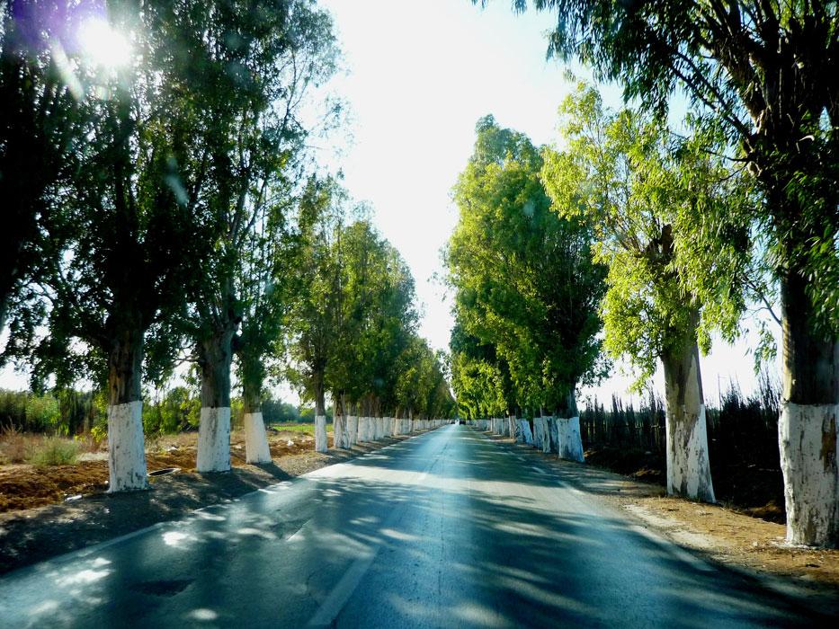 algeria117