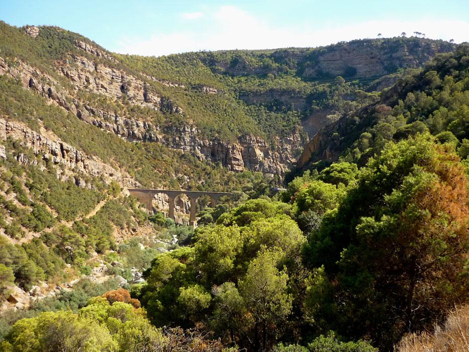 algeria118