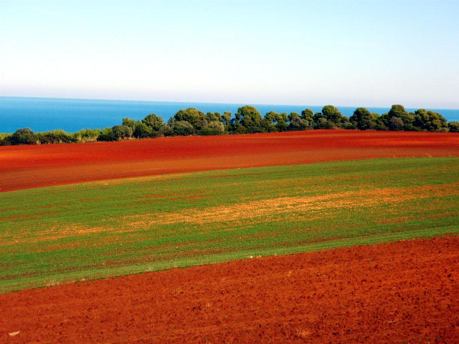 algeria132