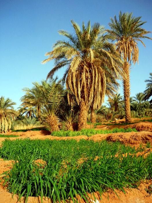 algeria299