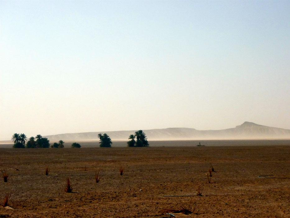 algeria303