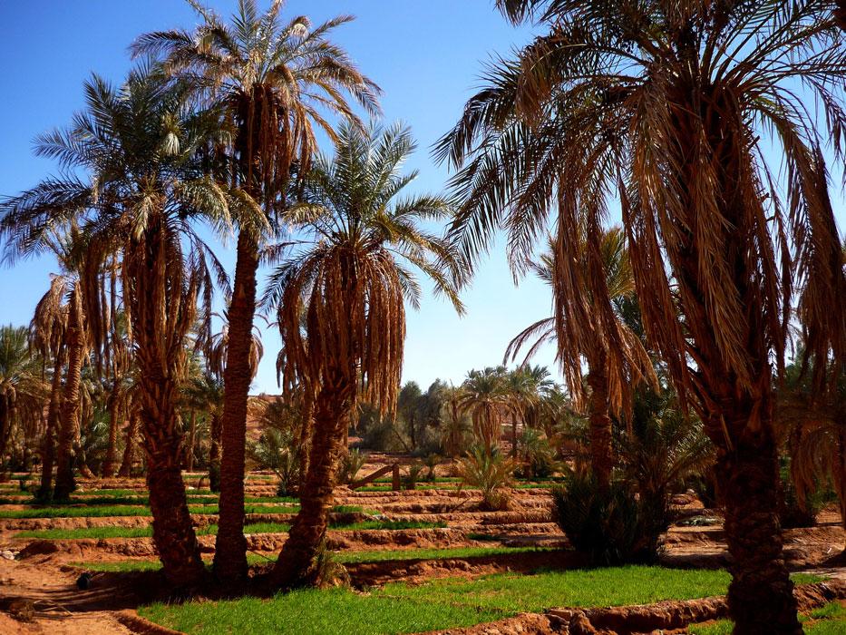 algeria310